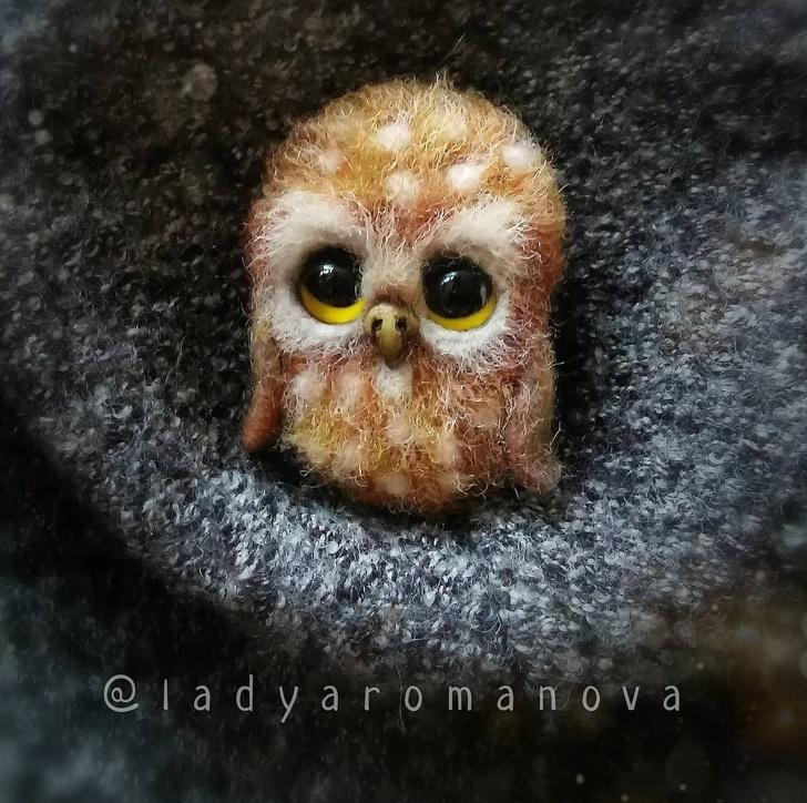 An Cute Owl