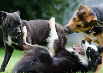 Deadliest dogs in the world you must aware