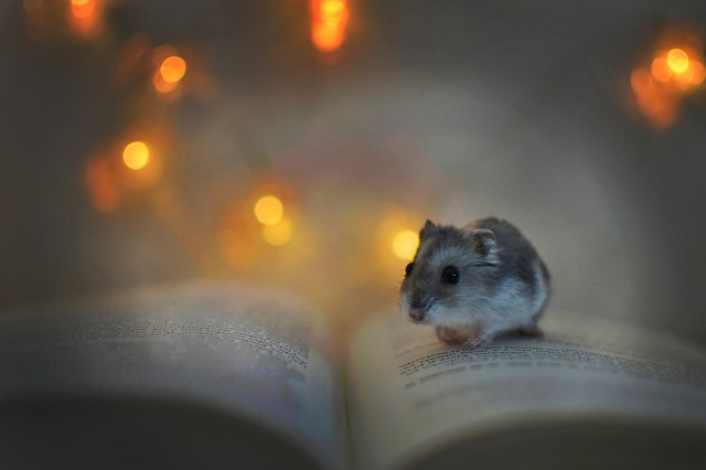 Hamster is on a small book -Uncommon Animals That Make Great Pets