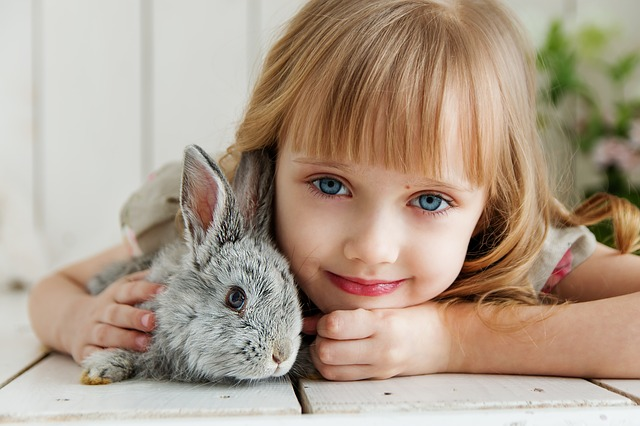 Uncommon Animals That Make Great Pets - Rabbits