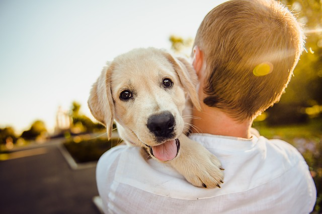 Secrets of how your pet can heal your mind-Pet dog with a boy