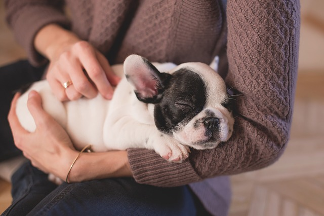 Massaging the puppy