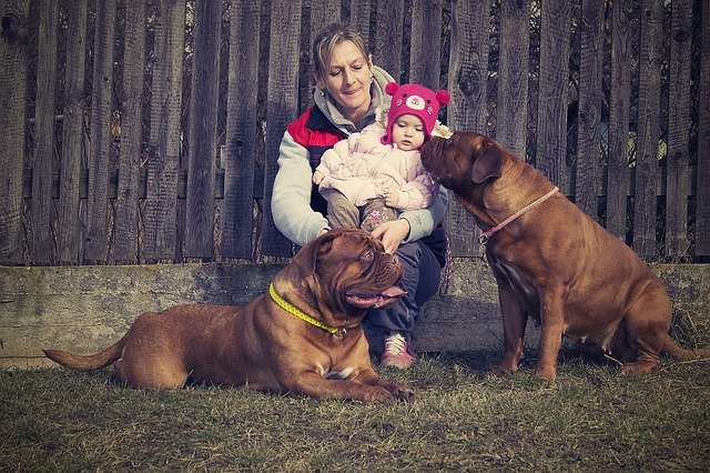 Mother with a baby and two dogs