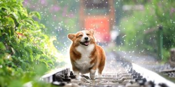 Happy dog in a rainy day