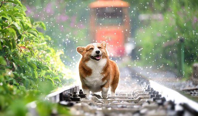 Happy dog in a rainy day