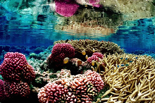 Amazing World of Lives Under The Sea Water-Coral reef