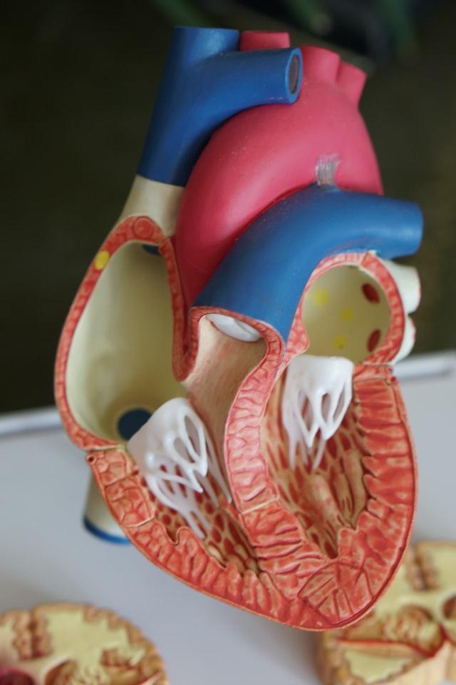 Heart Veins