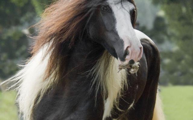 Horses_Moustache