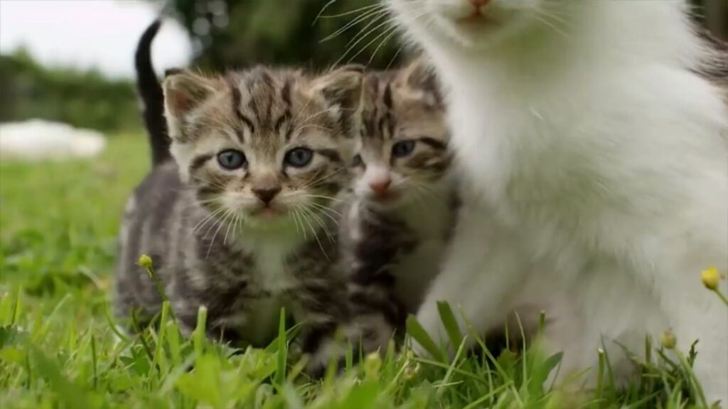 Cat With Kittens and Ducklings